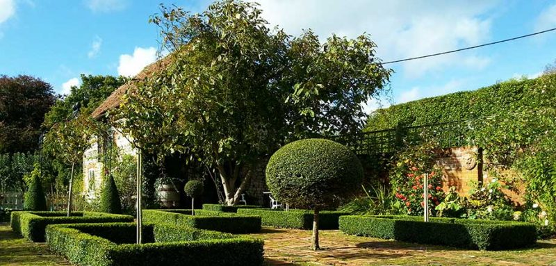 Trimmed topiary in Southstoke