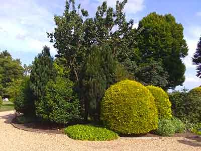 Trees and shrubs