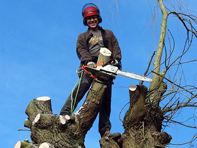 Tree pruning, shaping & reduction